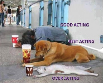 acting, cat, dog, hobo