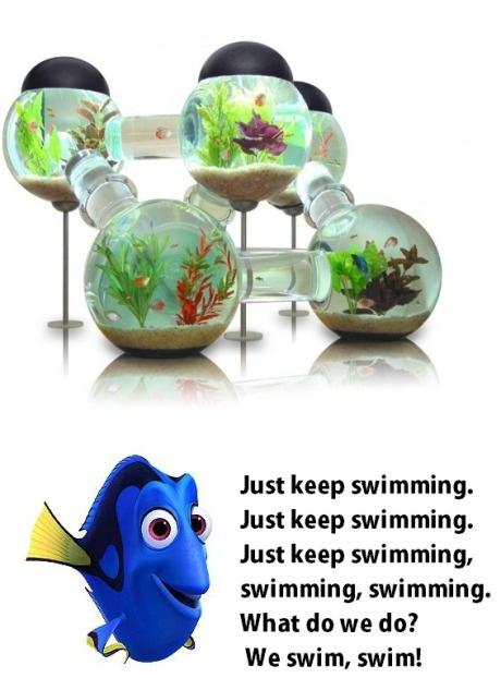 aquarium, win, swimming, nemo