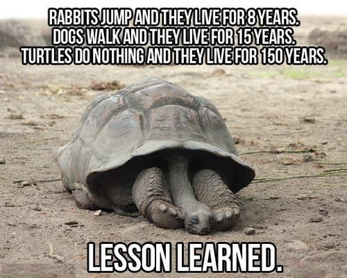 rabbits, dogs, turtles, life span, facts, lesson, lol