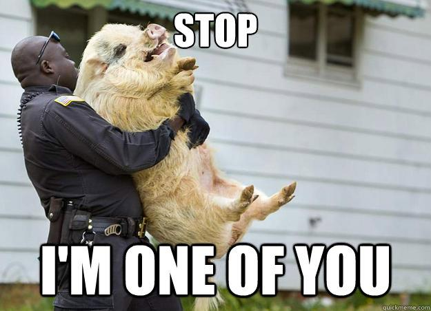 stop I'm one of you, police officer carrying pig