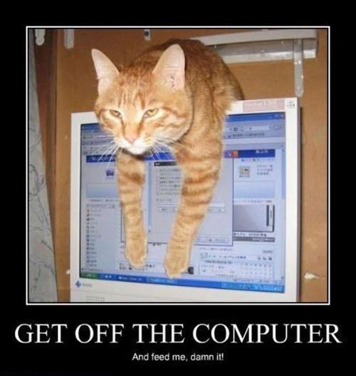 cat, computer, feed, motivation