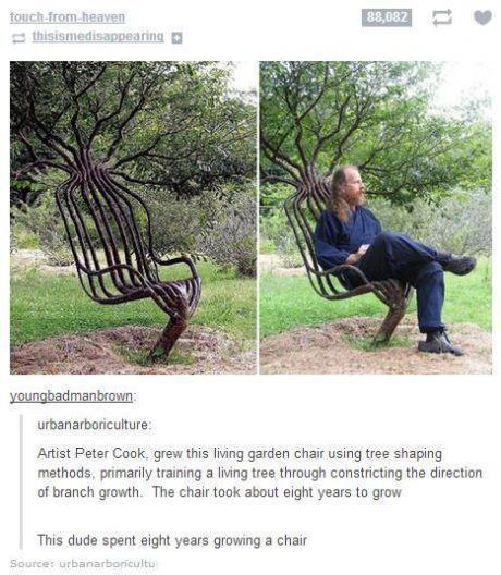 this dude spent eight years growing a chair, Artist peter cook grew this living chair using tree shaping methods, constricting the direction of branch growth