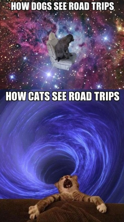 dog, cat, road trip, perception