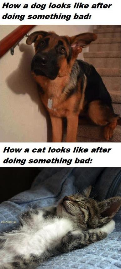 cat, dog, bad, comparison