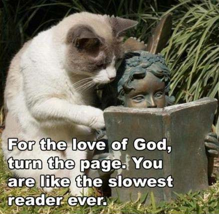 for the love of god turn the page, you are like the slowest reader ever, cat next to statue reading book