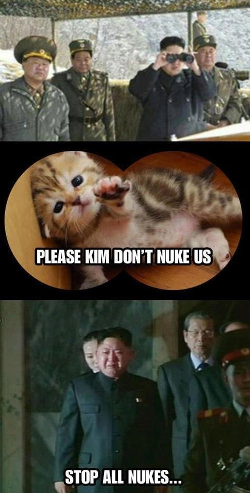 kim jong un, north korea, kitten, cat, nuke, cry