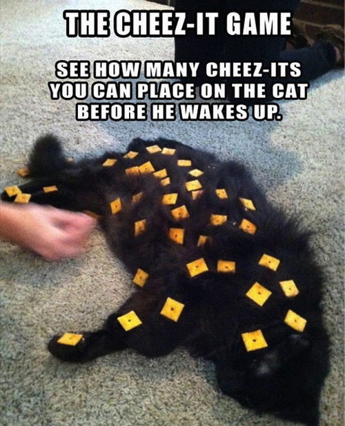 the cheez-it game, see how many cheek-its you can place on your cats before he wakes up