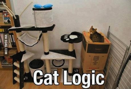 cat logic, meme, box