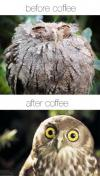 owl, coffee, before, after