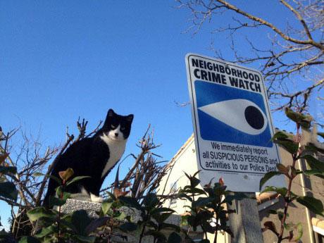 neighbourhood watch, cat, creepy, sign
