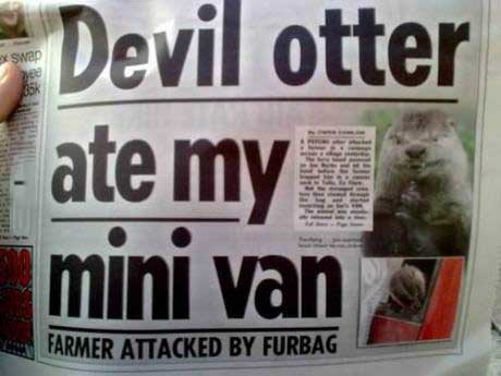 newspaper, devil otter, wtf, headline
