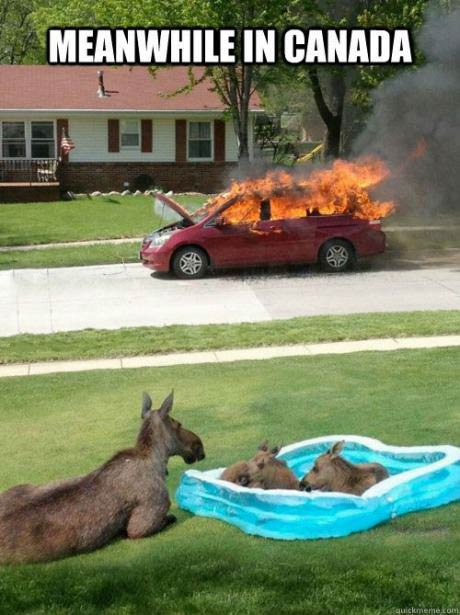 meanwhile in canada, mouse, car, fire, wtf