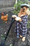 dog, poorly dressed, wtf, garden, chicken