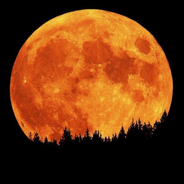 moon, orange, tress, forest, nature, scenery