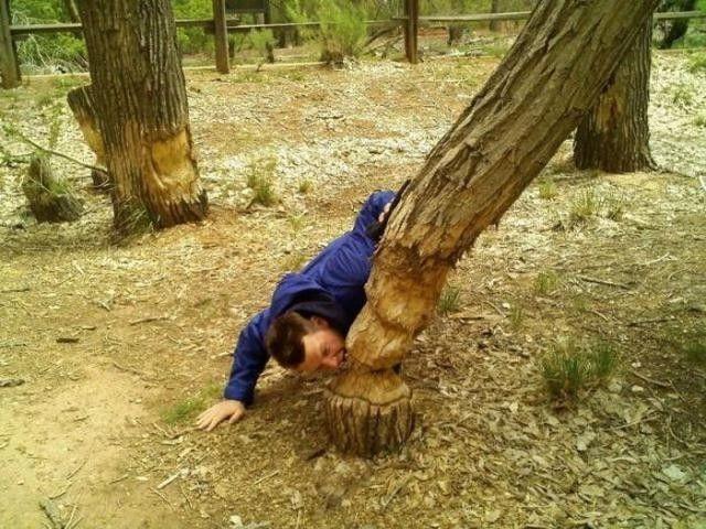 beaver, tree, eat, guy
