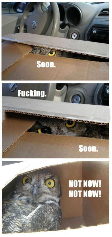 owl, box, soon, too soon, not now
