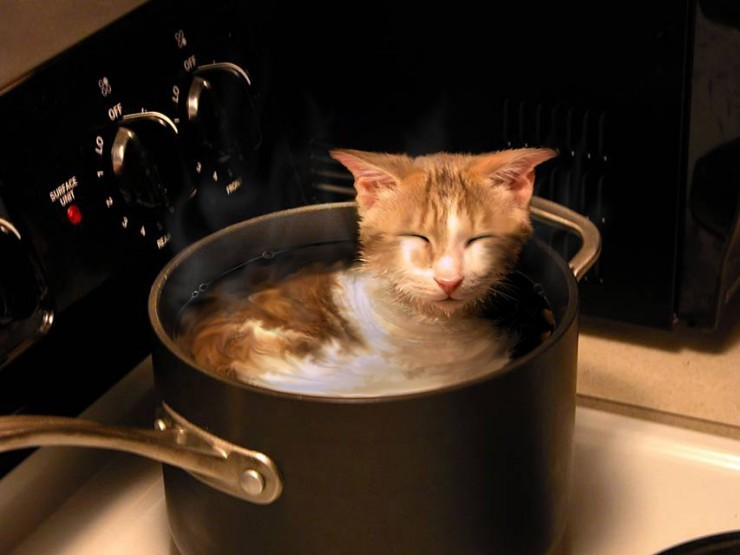 cat chilling in pot on stove, water, wtf