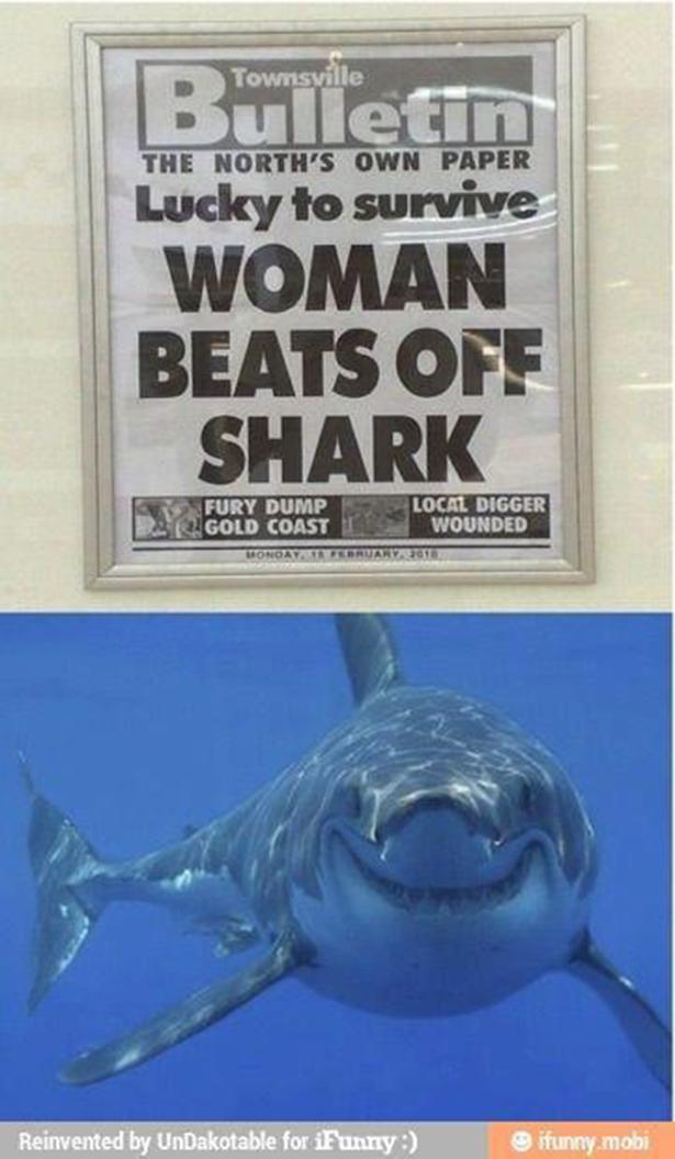 news, shark, beats off, headline