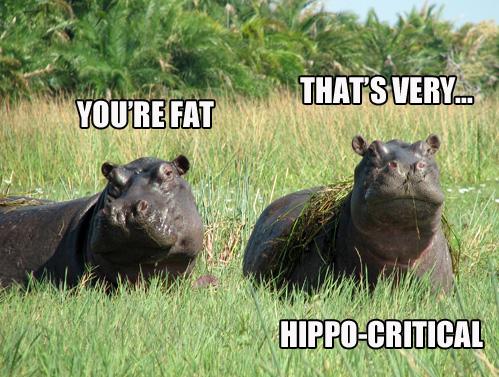 pun, meme, hippopotamus, hypocrite