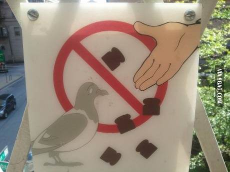 sign, pigeons, tiny loafs