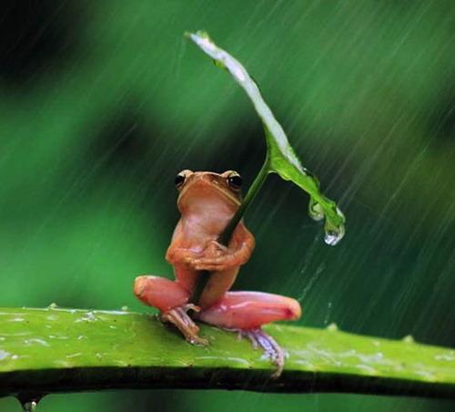 frog, rain, leaf, smart