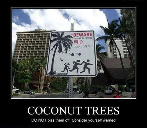 coconut tree, motivation, dangerous, sign, lol