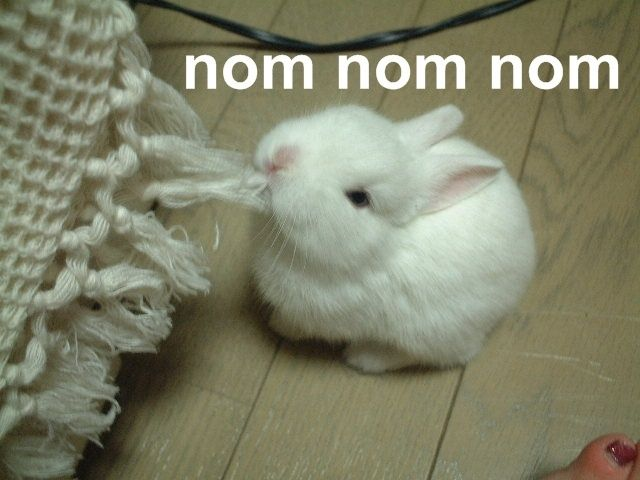 rabbit, carpet, eat, om nom
