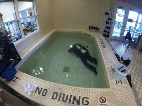no diving, rebel, pool