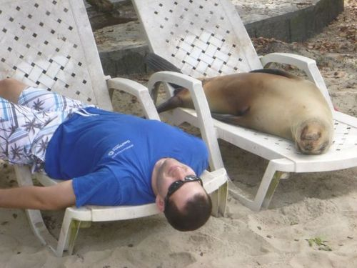 sun bathing, guy, wtf, seal