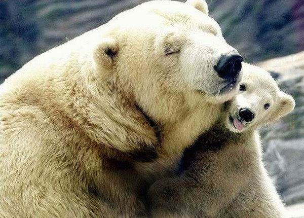 polar bear, cub, mother, cute