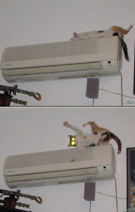 what my cat looks like when I turn on the air conditioner, troll