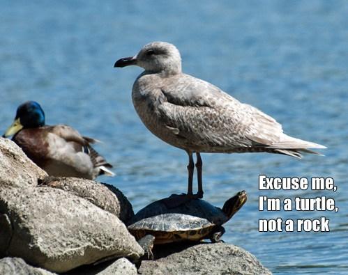 seagull, turtle, meme