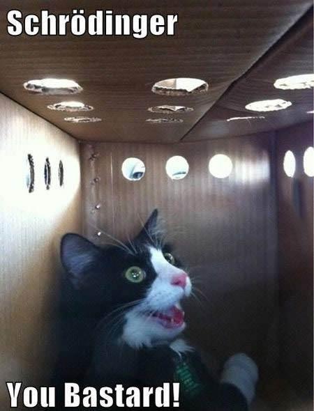 schrodinger, cat, box, meme, you bastard