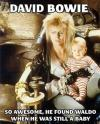 david bowie, waldo, baby, meme, labyrinth