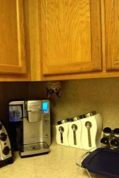 cat, kitchen, cabinet, cupboard, wtf