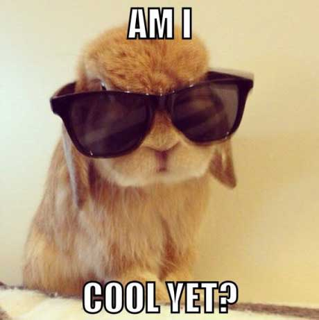 bunny, meme, cool, sun glasses