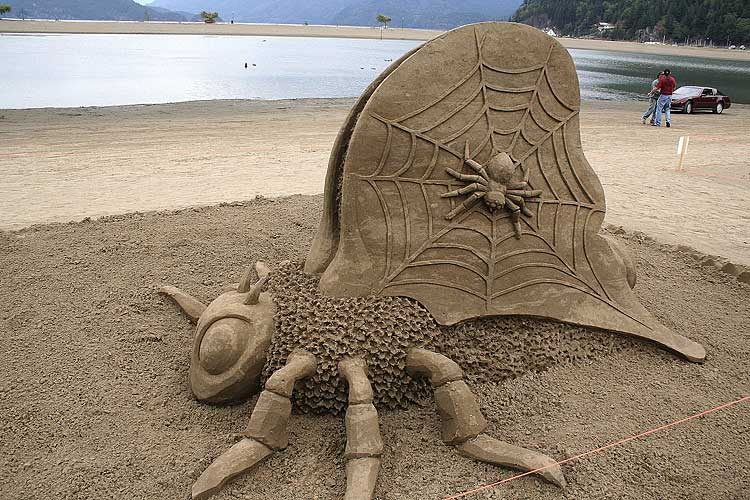 sand art, bug, spider, web, win