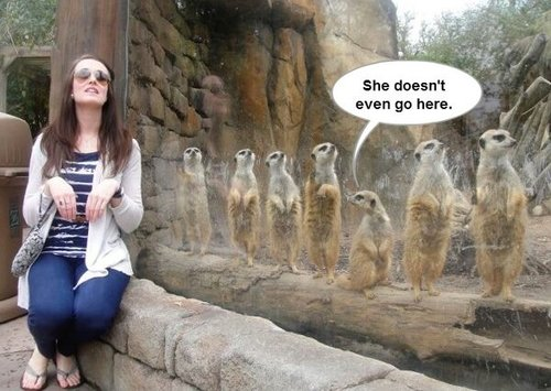 prairie dogs, comment, girl, cute