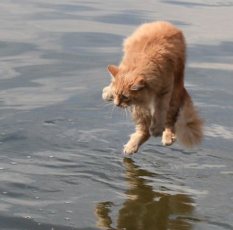 cat, water, tip toe, wtf, timing
