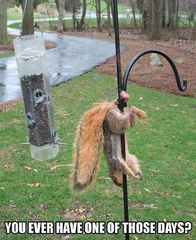 squirrel, balls, ouch, meme