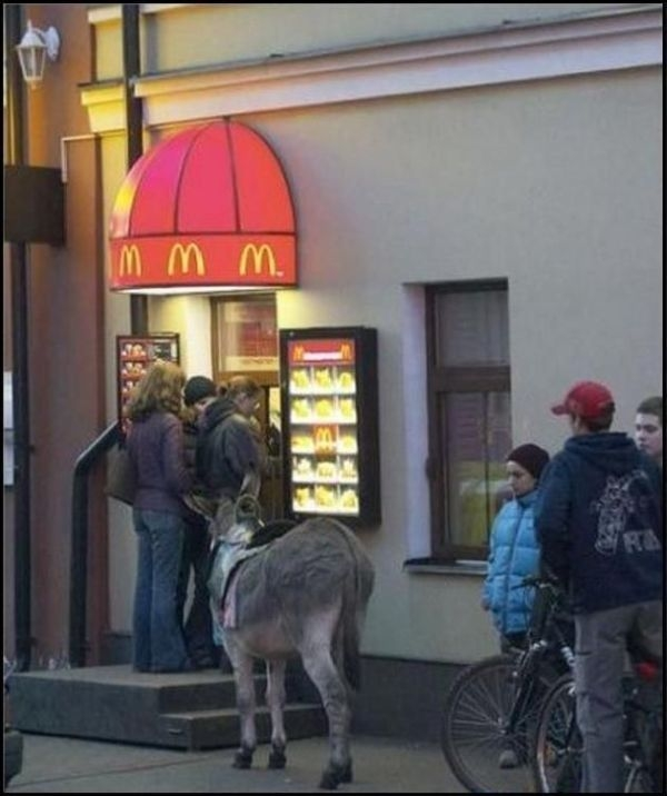 ass, mcdonald's, donkey, wtf, line