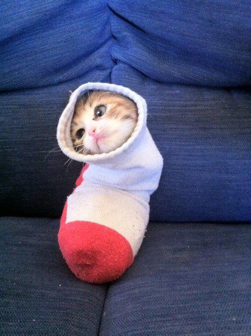 cat, sock, cute
