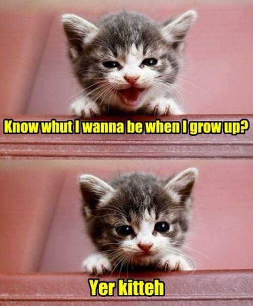 kitten, cute, joke