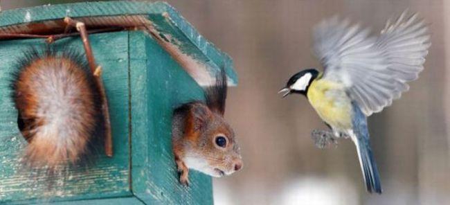squirrel, humming bird, bird house