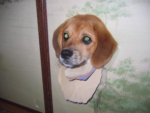 dog, head, wall, hole, lol