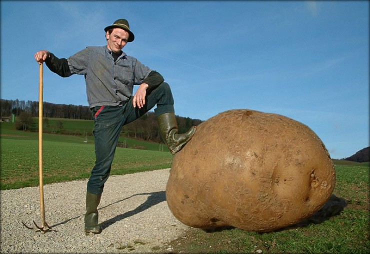 just a farmer and his giant potato