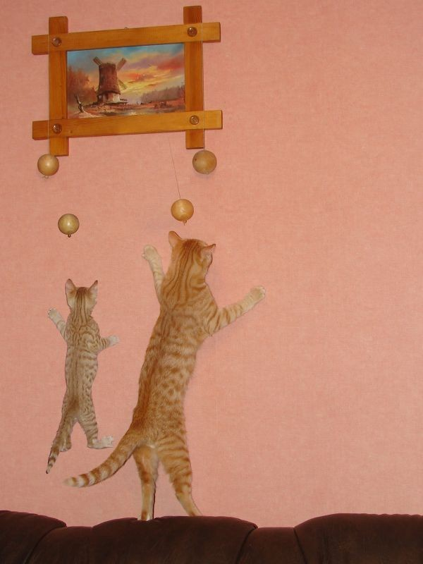 cat, father, son, climb, wall, cute