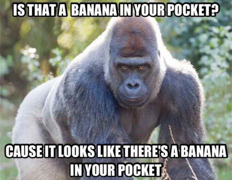 is that a banana in your pocket, cause it looks like there's a banana in your pocket, gorilla, meme