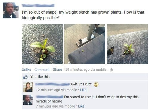 weight lifting bench, plant, lol, facebook status