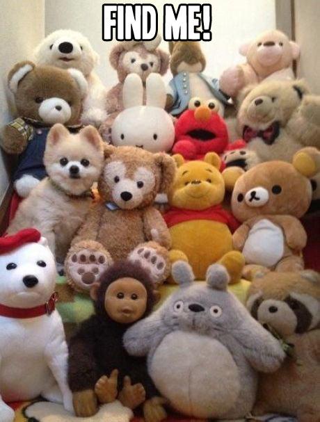 meme, find me, game, stuffed animals, dog